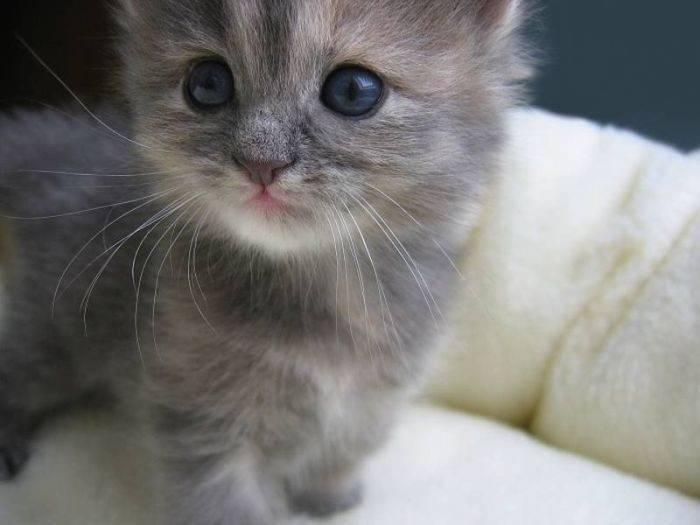 Słodkie kociaki 12