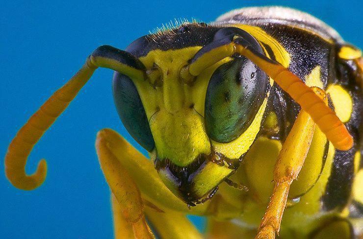 Makrofotografia: owady #3 32