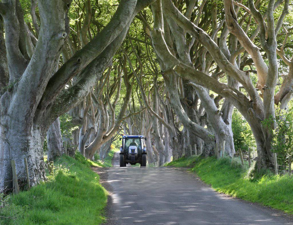 The Dark Hedges 2