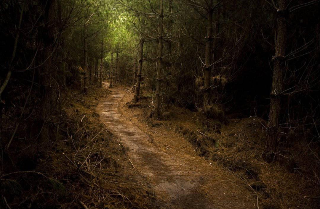 Tajemnicze lasy 37