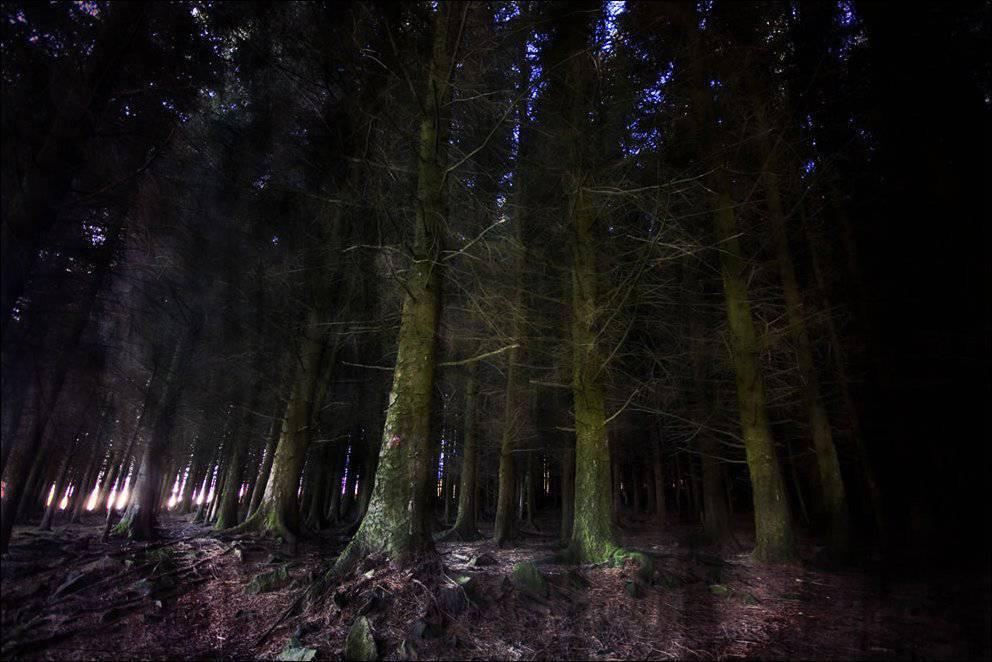 Tajemnicze lasy 21
