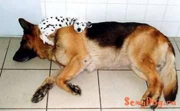 Śmieszne zdjęcia psów 28