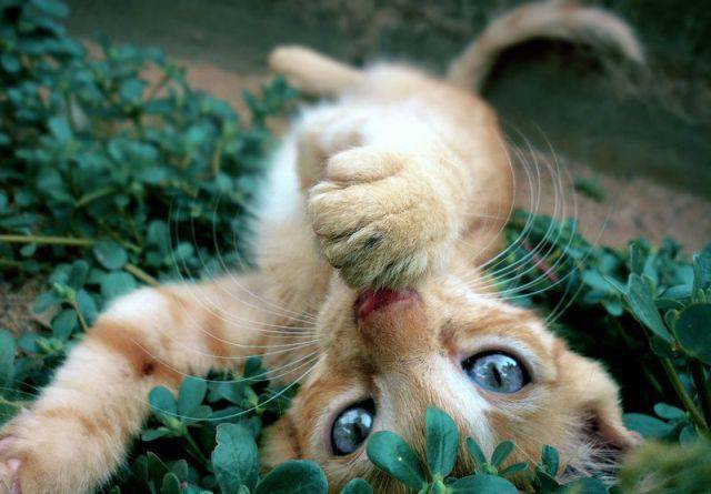 Śmieszne zdjęcia zwierząt #9 45