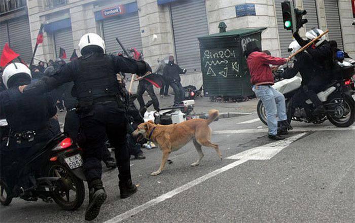 Psy z ulicznych protestów 33