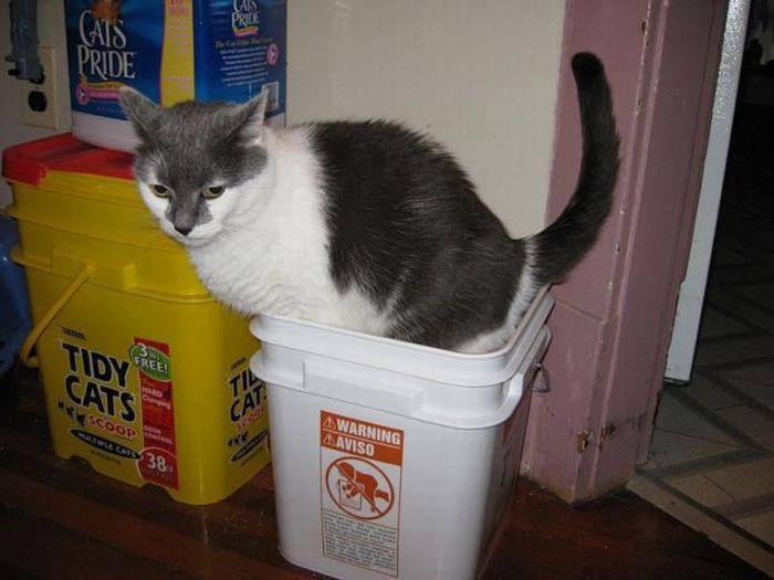 Wszędobylskie koty #2 26