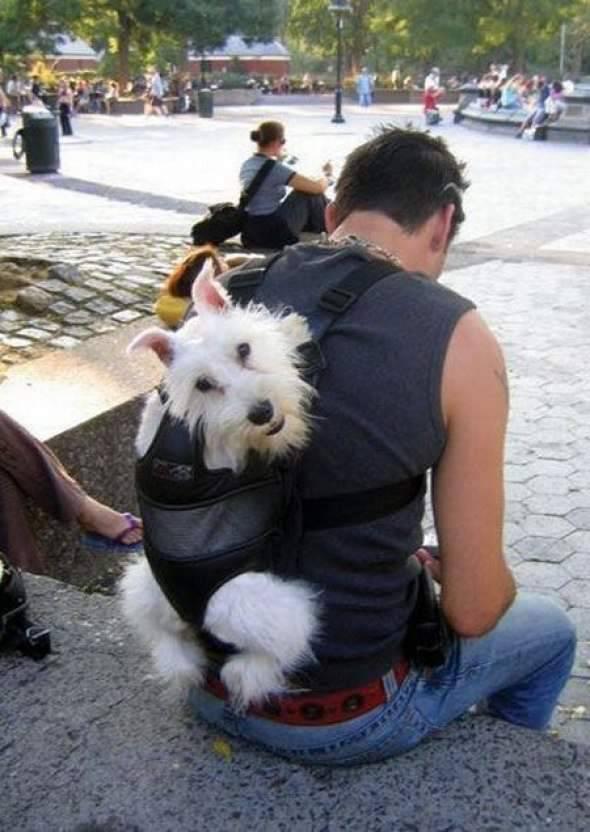 Pies - najlepszy przyjaciel człowieka 11