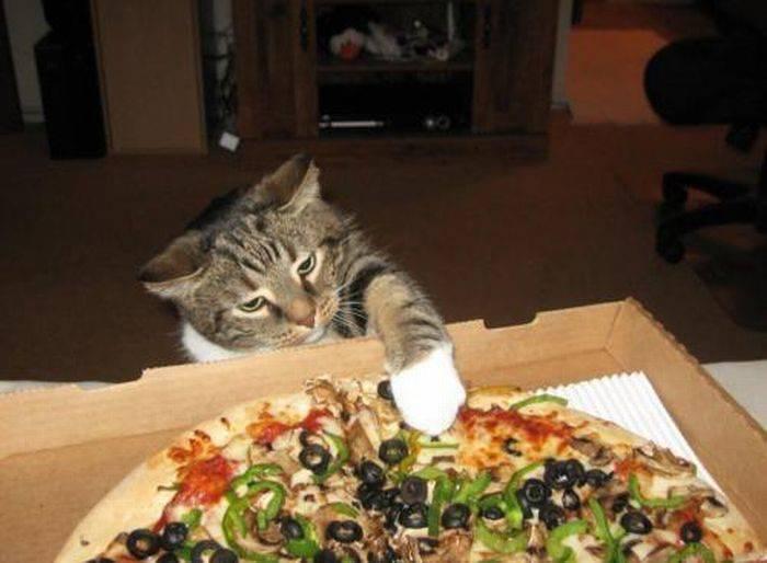 Nieznośne koty 41