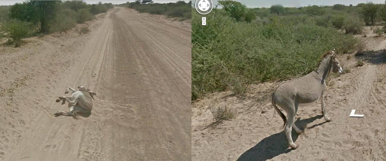 Nietypowe sceny z Google Street View #2 29