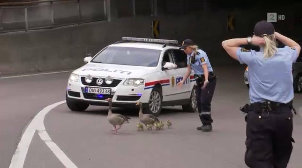 Policja z przymrużeniem oka #4 22