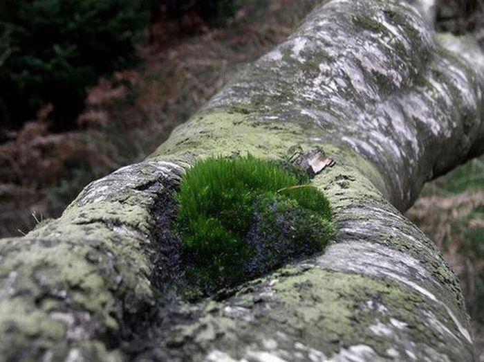 """""""Seksowne"""" drzewa 5"""