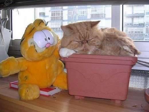 Rozpuszczone, leniwe koty 15