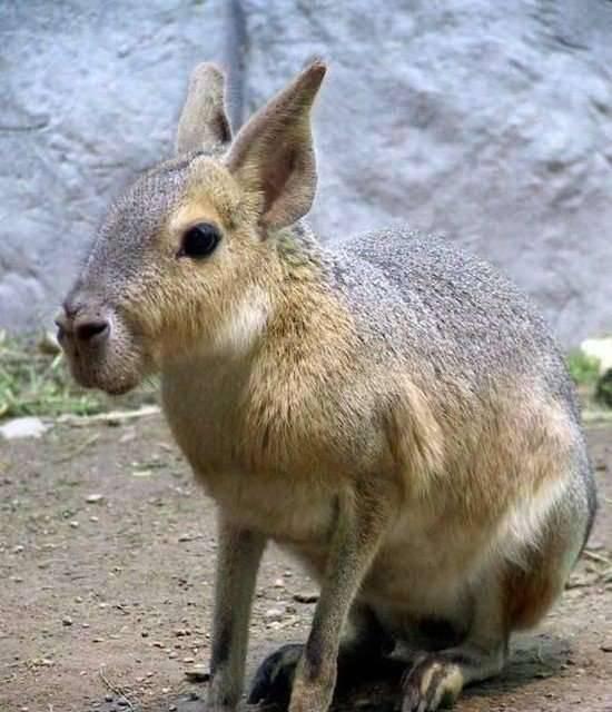 Najdziwniejsze zwierzęta świata 3