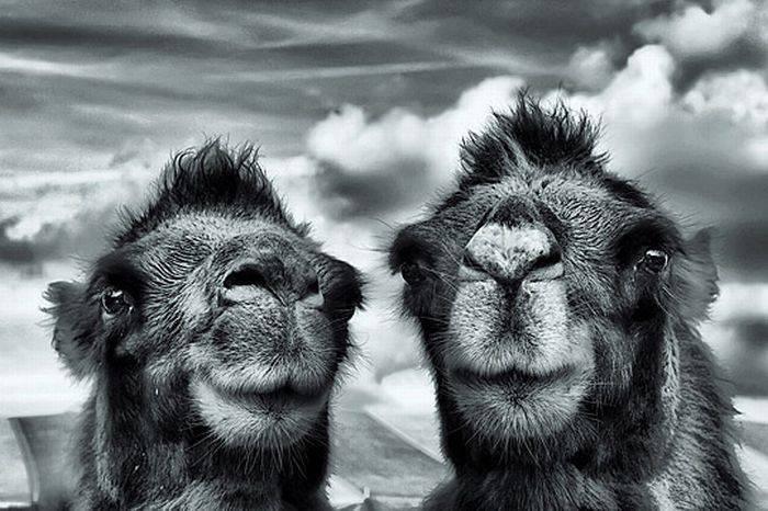 Zdjęcia zwierząt w HDR 34