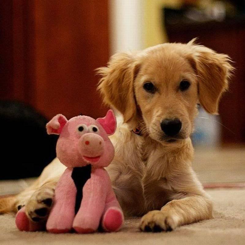 Zabawne zwierzaki #101 13