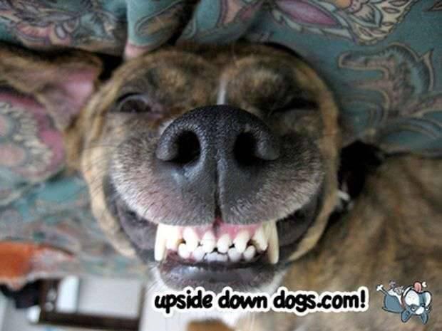 Psy do góry nogami 16