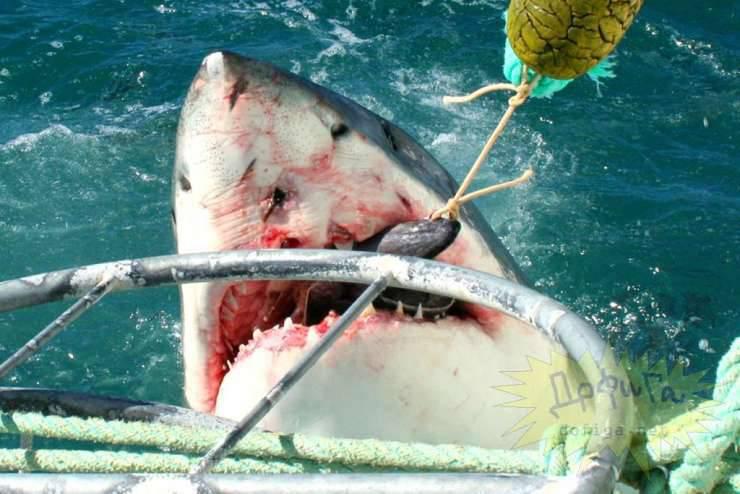 Człowiek zaatakowany przez rekina 1