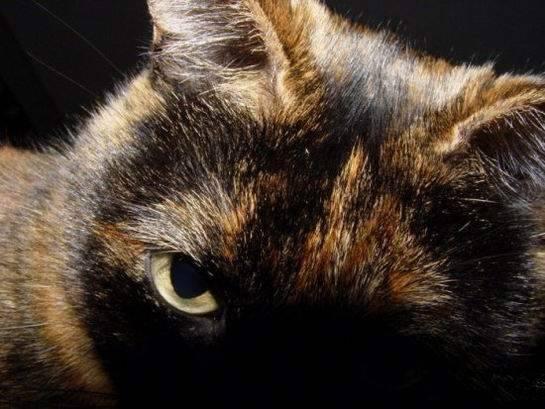 Śmieszne zdjęcia kotów #2 10