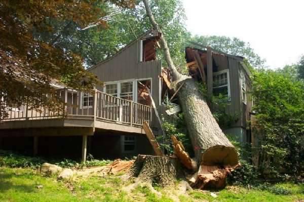 Jak nie należy ścinać drzew 1