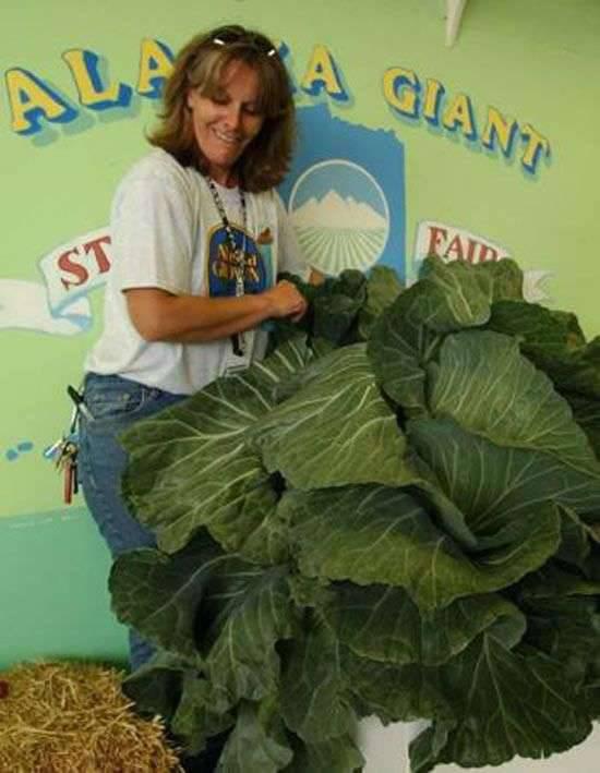 Warzywa giganty 10