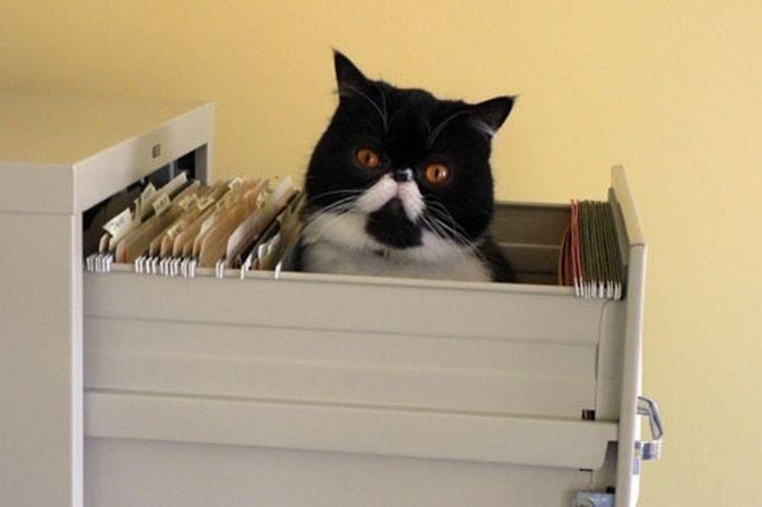 Jak przechowywać koty? 4