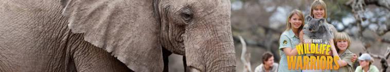 Steve Irwins Wildlife Warriors S01E22 720p HDTV x264-NORiTE