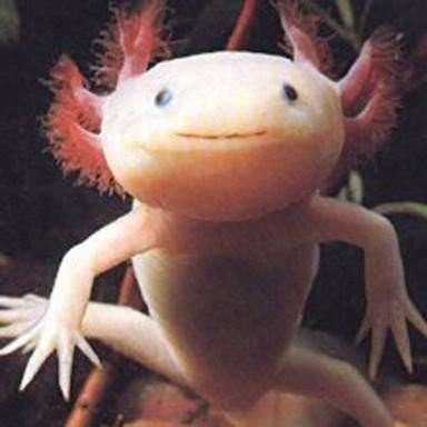 Najdziwniejsze zwierzęta świata 21