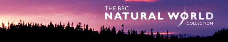Natural.World.S35E02.Super.Powered.Owls.720p.HDTV.x264-C4TV