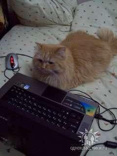 Koty i PC 21