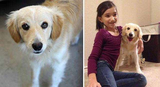 Przed i po adopcji 16