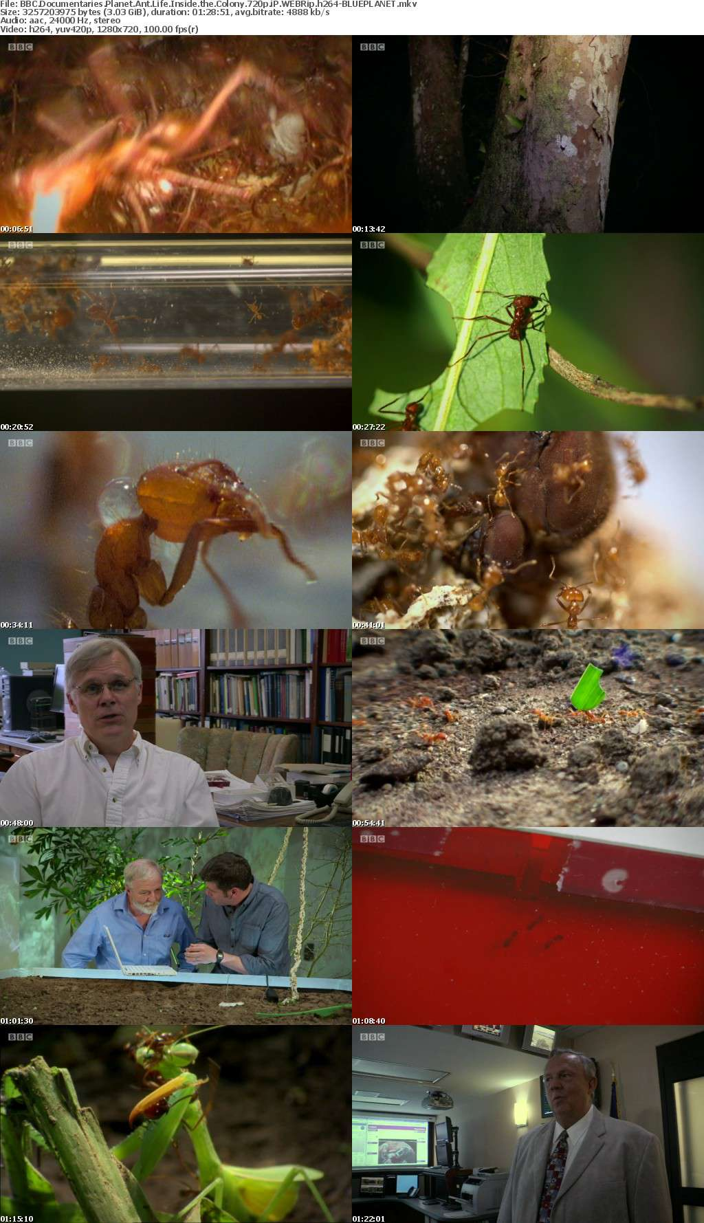 BBC Documentaries Planet Ant Life Inside the Colony 720p iP WEBRip h264-BLUEPLANET