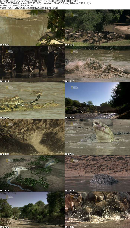 Africas Predator Zones S01E02 Trenches HDTV x264-CBFM