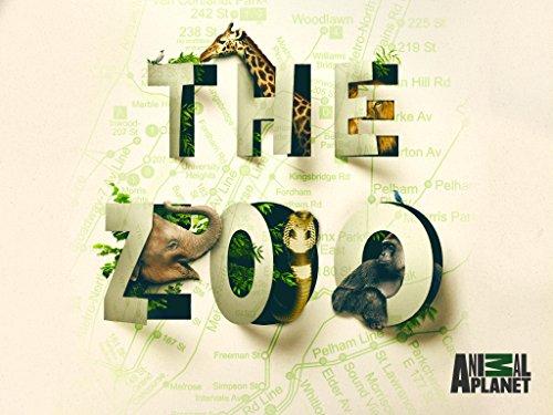 The Zoo US S02E10 A Gorilla with Heart 720p HDTV x264-CRiMSON