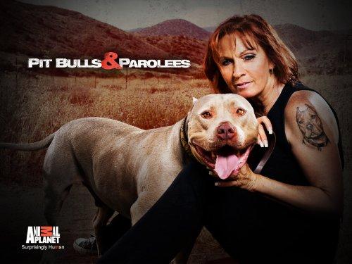 Pit Bulls and Parolees S12E06 A Puppys Journey Home WEB x264-CAFFEiNE