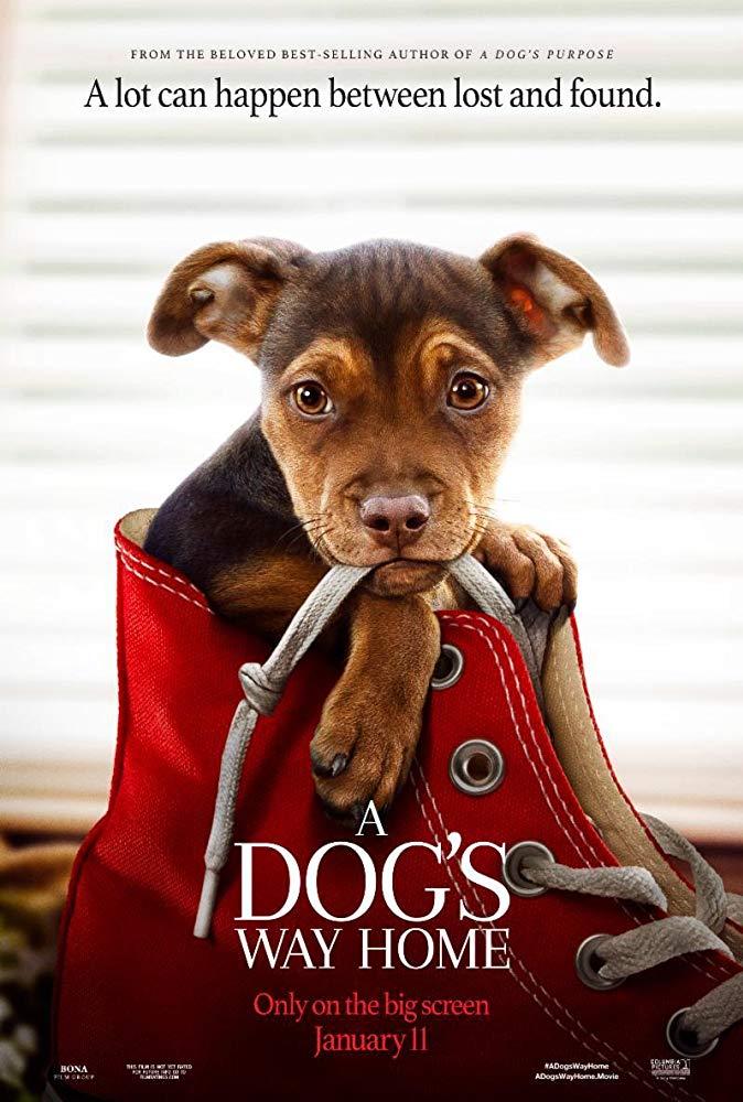 A Dogs Way Home 2019 720p HC HDRip X264 AC3-EVO