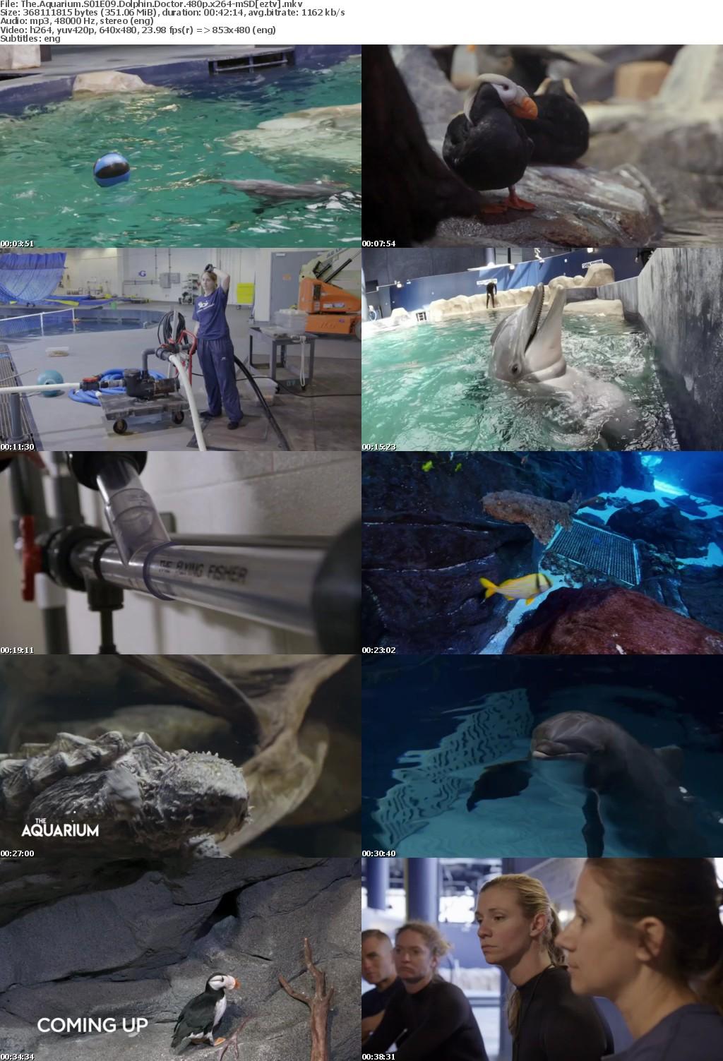 The Aquarium S01E09 Dolphin Doctor 480p x264 mSD