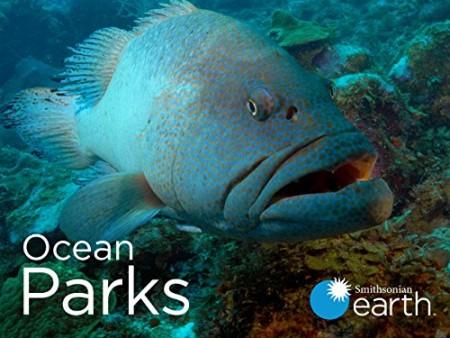 Ocean Parks S01E04 Mesoamerican Reef WEB h264-CAFFEiNE