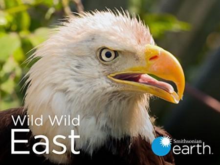 Wild Wild East S01E13 Deer WEB h264-CAFFEiNE